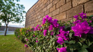 muro en las acacias