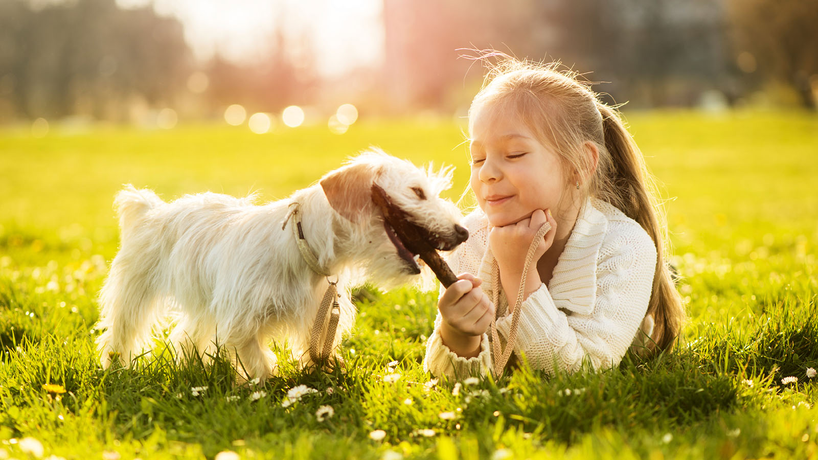 niña jugando con perro en el cesped