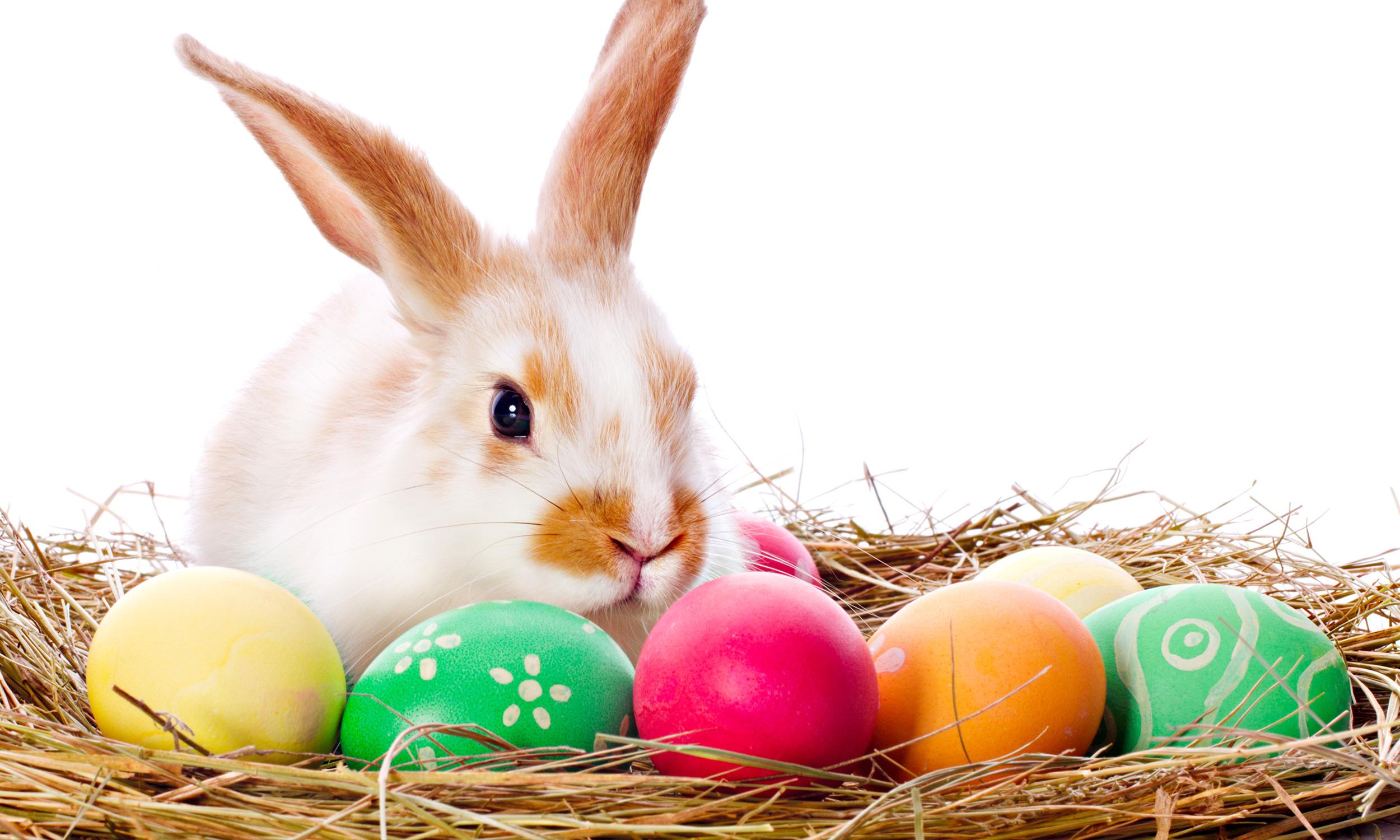 portada de blog sobre el origen del conejo de pascua