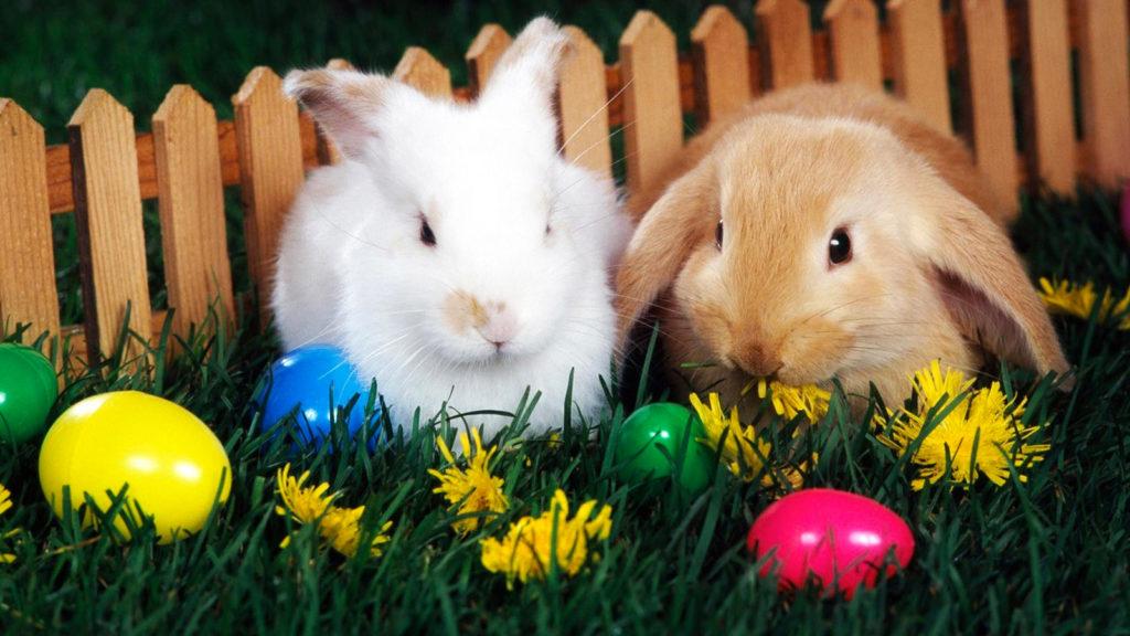 El Conejo de Pascua: un tierno símbolo de vida y fertilidad