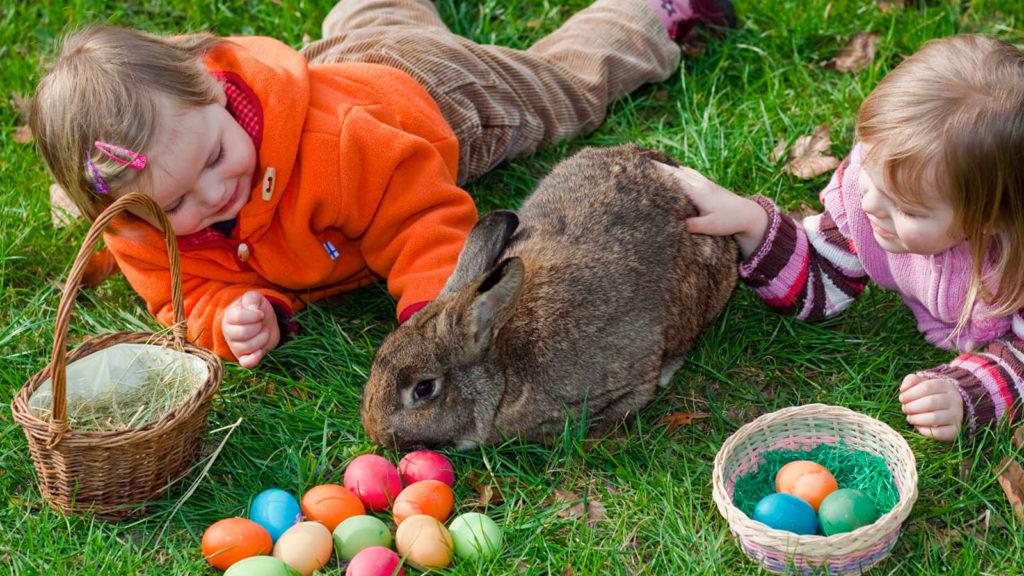 niños jugando con conejo