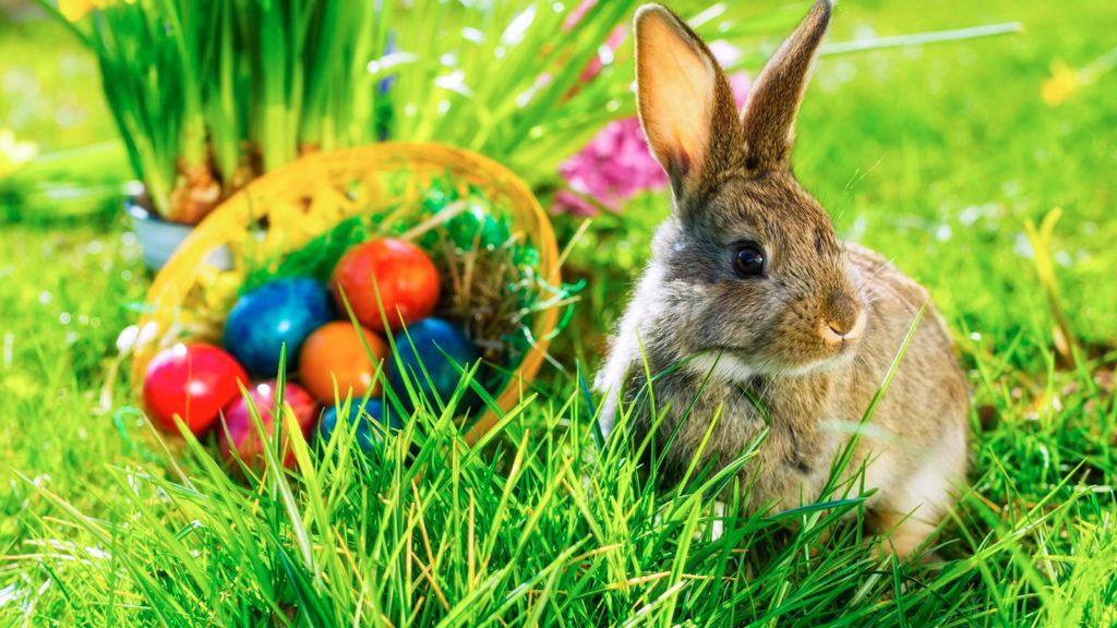 conejo posando junto a huevos de pascua